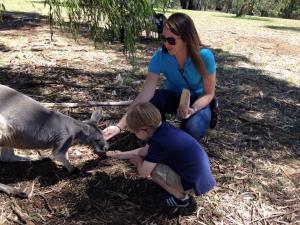 The kangaroos were generally friendly.