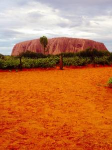Sunset viewing of Uluru