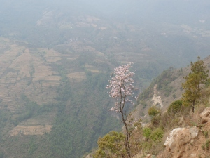 Flowering tree on our way up.