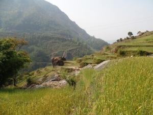 The hillside.